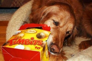 Tim Hortons TimBits for Dogs